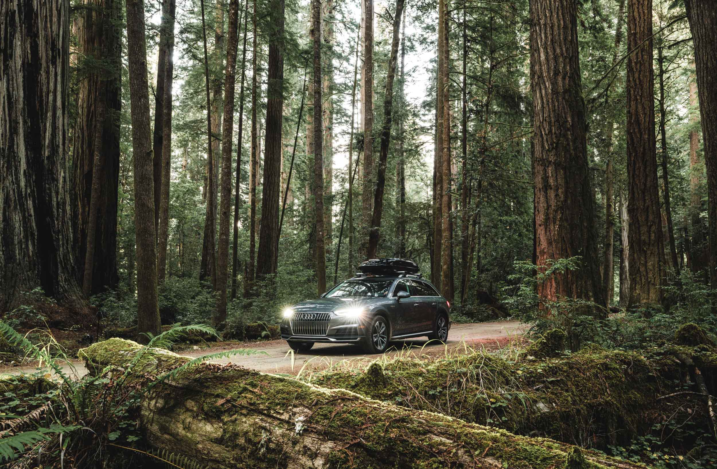 Silver Audi Allroad with headlights on sits on road in a dark and mossy redwood forest