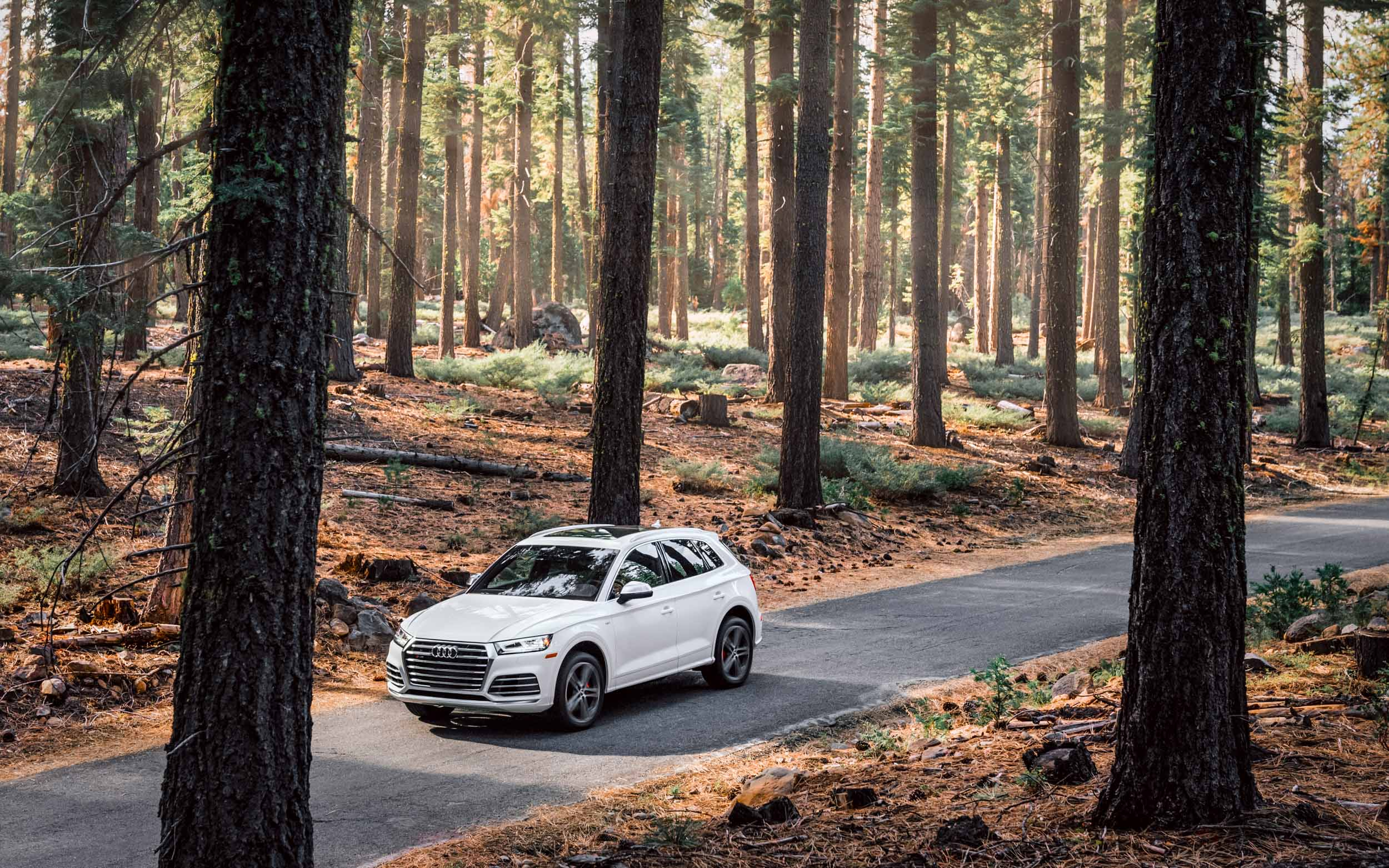 A white Audi Q7 drives through a beautiful forest near Lassen Volcanic National Park