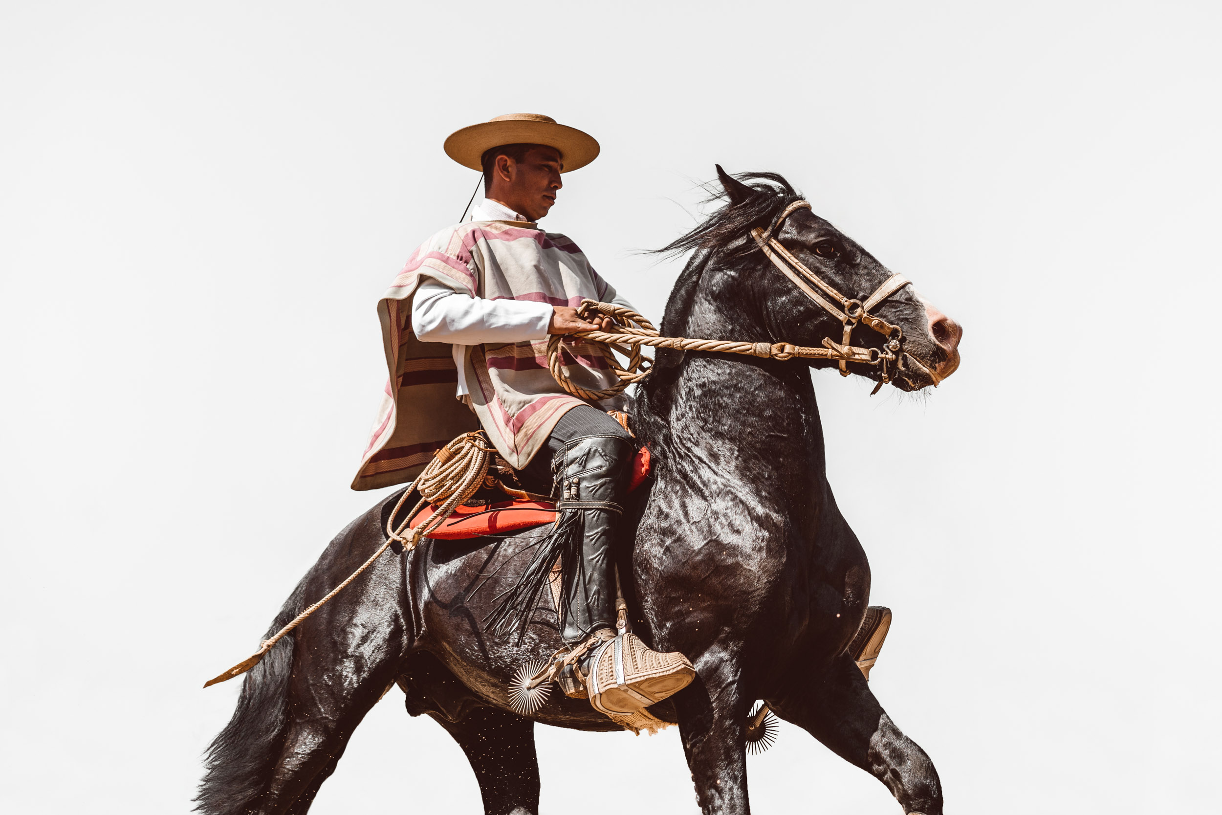 Chilean Huaso cowboy in his traditional attire riding his horse